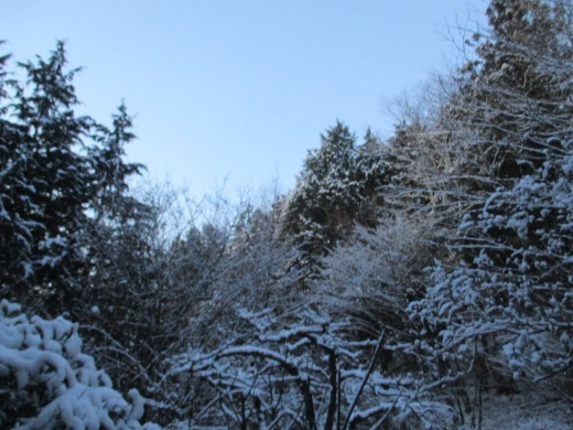 春雪       4月 2日(火)_d0127634_07580165.jpg