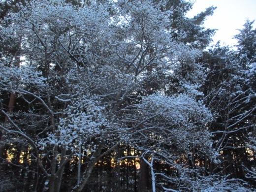 春雪       4月 2日(火)_d0127634_07595976.jpg