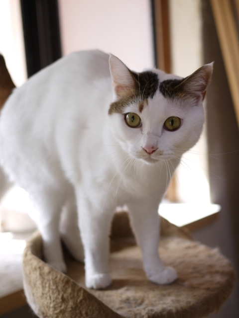 猫のお留守番 グレムリンちゃん編。_a0143140_20335382.jpg
