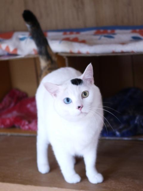 猫のお留守番 オッドちゃん編。_a0143140_20390701.jpg