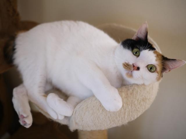 猫のお留守番 ちびちゃん編。_a0143140_20442117.jpg