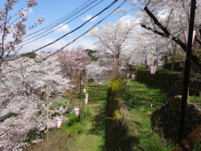 さくら、桜、サクラの散歩♪_c0330749_17530141.jpg