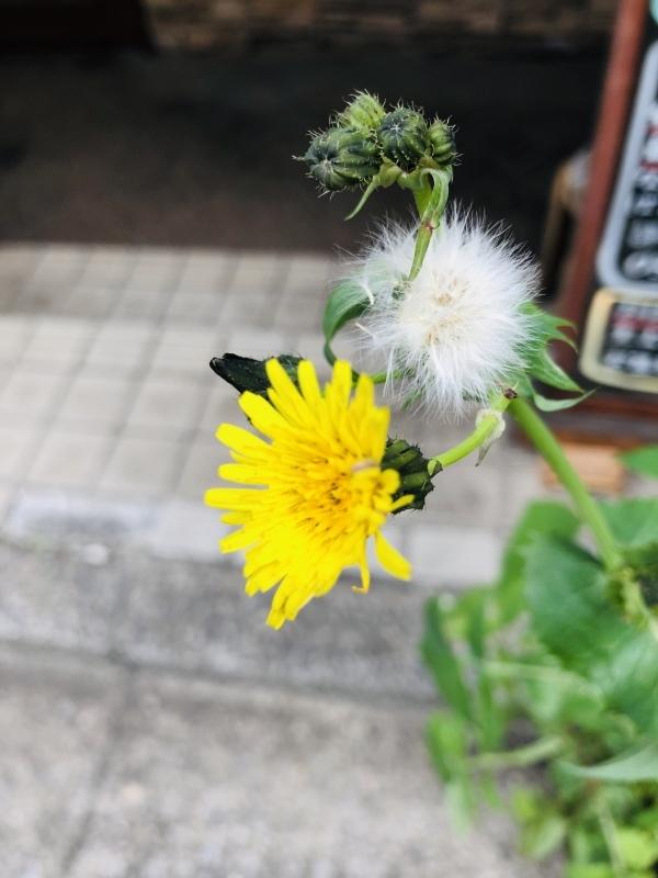 雑草、咲いた。&4月3日(水)のランチメニュー_d0243849_14353470.jpeg