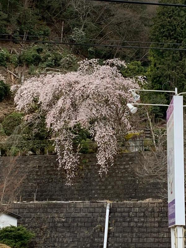 2019年4月 冨士屋便り_c0148951_11444587.jpg