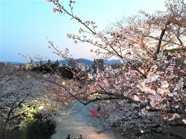福岡 西公園の桜~_d0082356_11293875.jpg