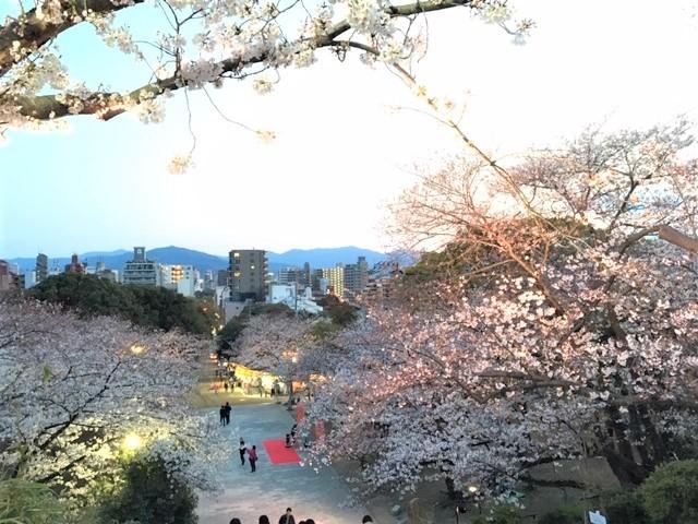 福岡 西公園の桜~_d0082356_11295337.jpg