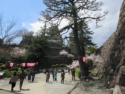 桜_f0006356_08553265.jpg