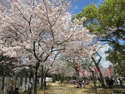 桜_f0006356_08554528.jpg