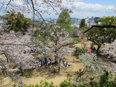 桜_f0006356_08560176.jpg