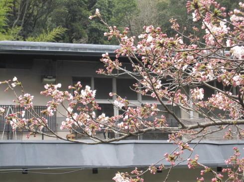 2019年4月2日 桜実況中継_c0078659_16432336.jpg