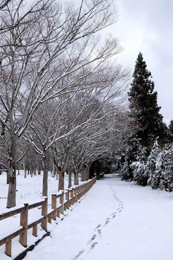 まだ冬が終わりません_e0220159_14132172.jpg