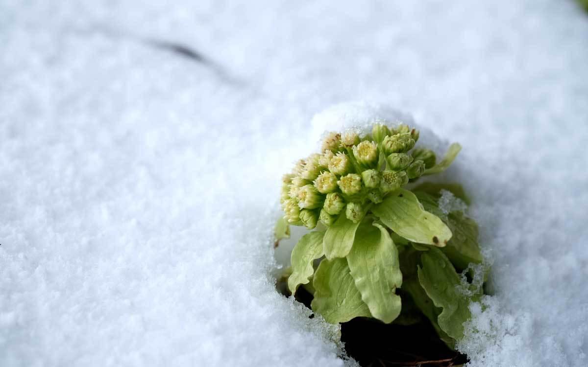 まだ冬が終わりません_e0220159_14133929.jpg
