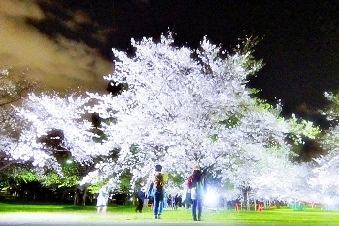 桜花の宴_c0074067_23331733.jpg