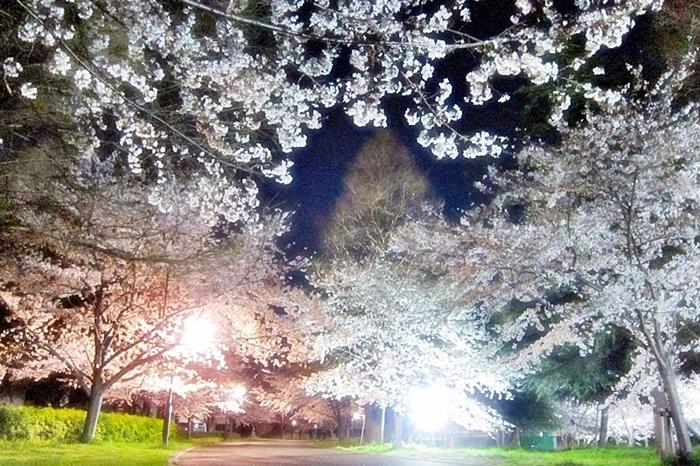 桜花の宴_c0074067_23333191.jpg