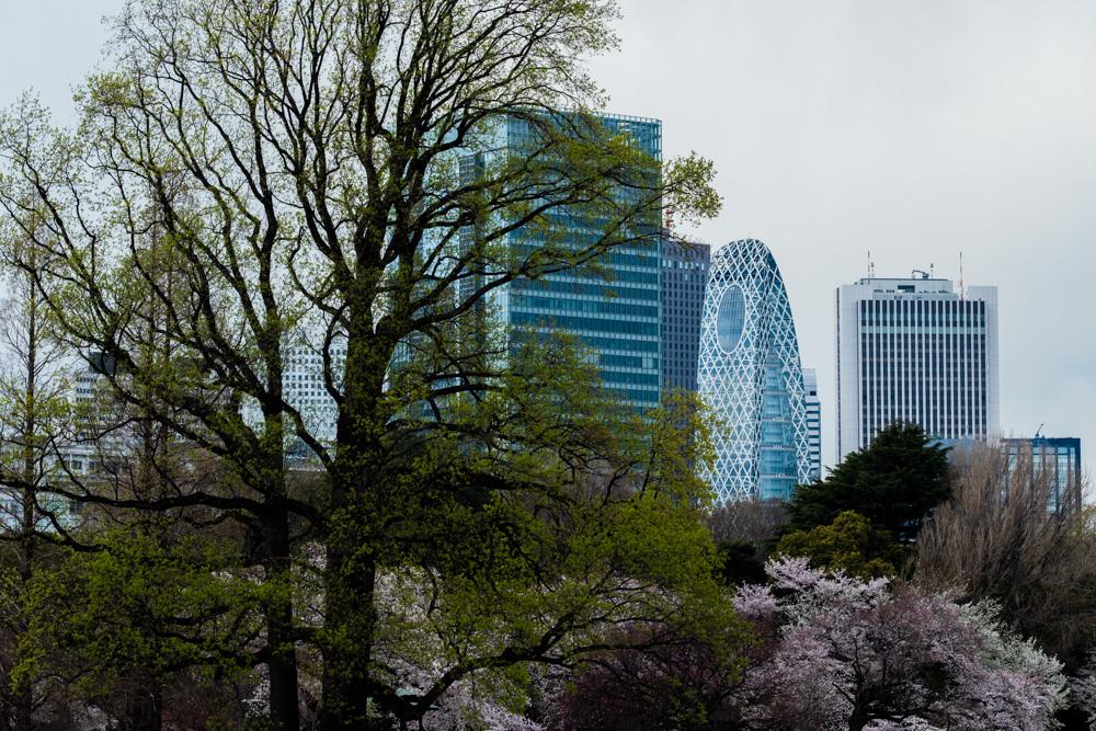 桜_新宿御苑_a0261169_20500256.jpg