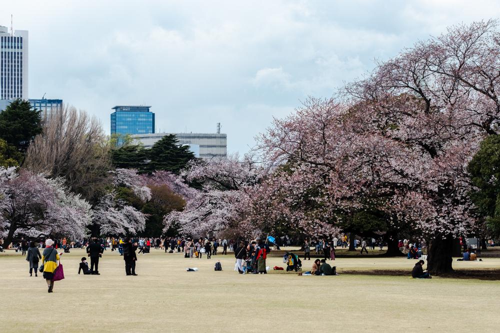 桜_新宿御苑_a0261169_20570699.jpg