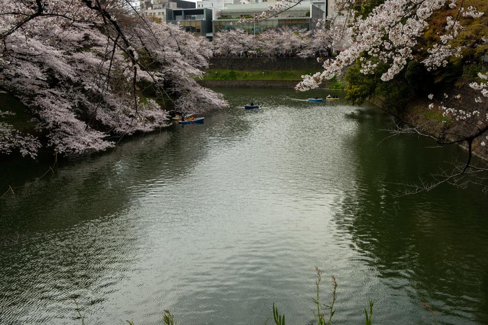 千鳥ヶ淵、靖国神社の桜_a0261169_21390198.jpg