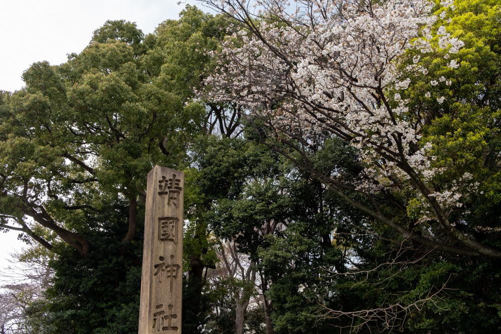 千鳥ヶ淵、靖国神社の桜_a0261169_21523317.jpg