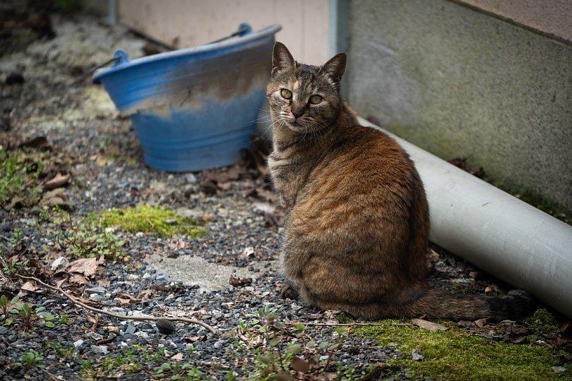 廃校の猫校長_d0353489_20552011.jpg
