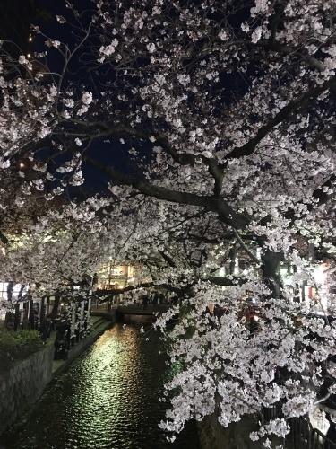 桜とドーナツ_f0018889_21435294.jpeg