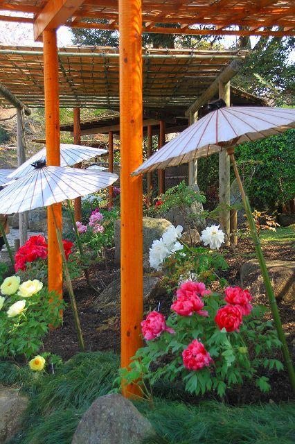 鎌倉 鶴岡八幡宮の桜と牡丹_f0374092_16405225.jpg