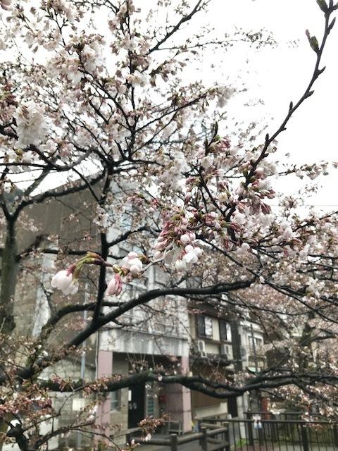 城崎へ 温泉_f0204295_09504607.jpg