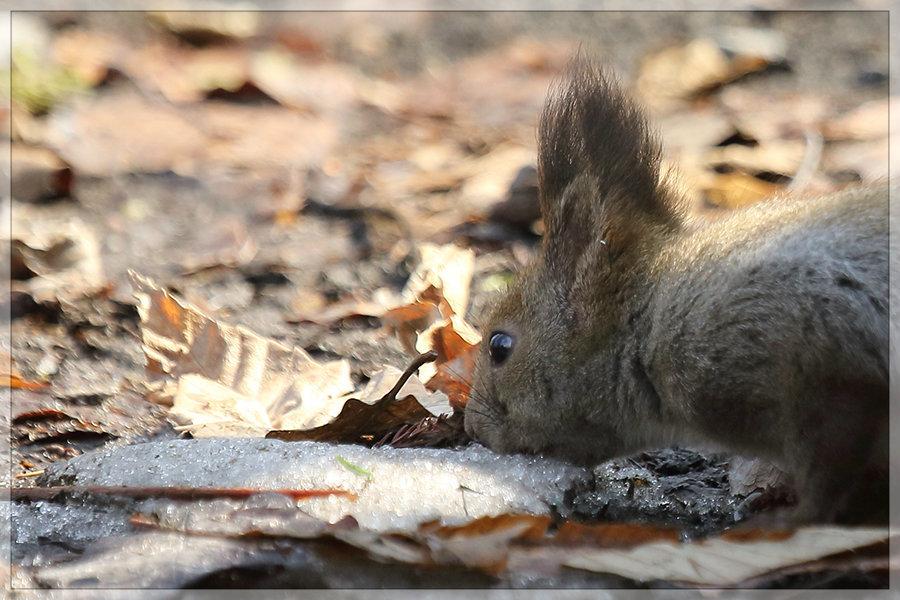 秋の残り、冬の残り_e0235910_10064034.jpg