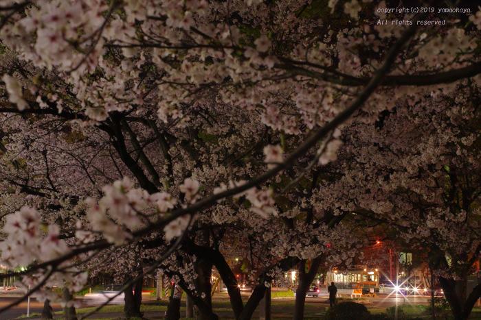 夜桜_d0309612_23500015.jpg