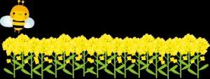菜の花畑 ③_b0044115_08390063.jpg