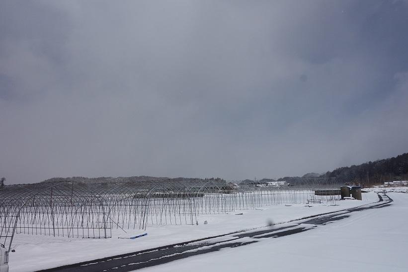 4月の雪_e0112417_21511639.jpg