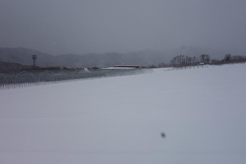 4月の雪_e0112417_21515657.jpg