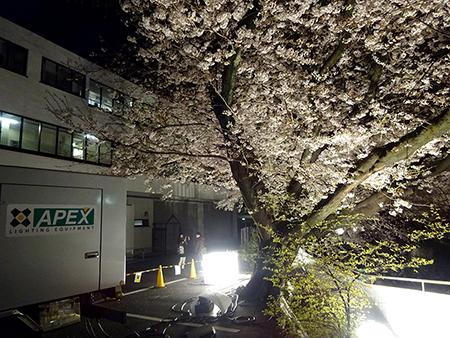 東宝スタジオの桜ライトアップ 2019_f0097523_17063569.jpg