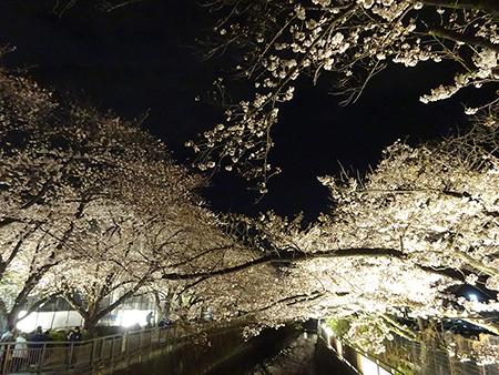東宝スタジオの桜ライトアップ 2019_f0097523_17081043.jpg