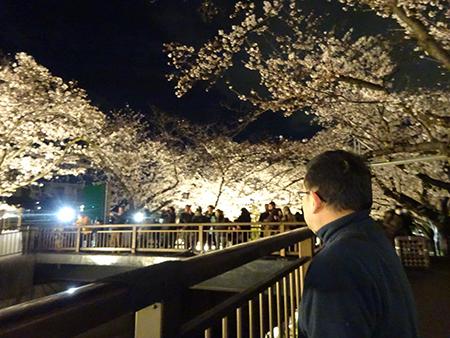 東宝スタジオの桜ライトアップ 2019_f0097523_17083178.jpg