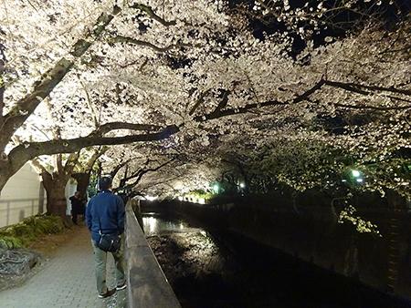 東宝スタジオの桜ライトアップ 2019_f0097523_17090029.jpg