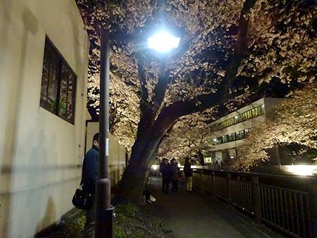 東宝スタジオの桜ライトアップ 2019_f0097523_17105456.jpg