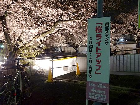 東宝スタジオの桜ライトアップ 2019_f0097523_17145152.jpg