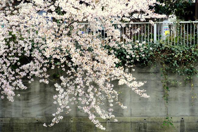 「ホテル椿山荘東京 ル・ジャルダンのアップルパイ」_a0000029_09593252.jpg