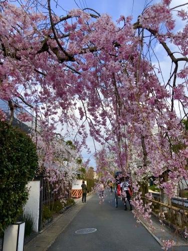 桜フィーバー続く。。。_a0197730_15042808.jpg