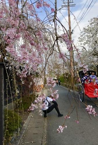 桜フィーバー続く。。。_a0197730_15045146.jpg