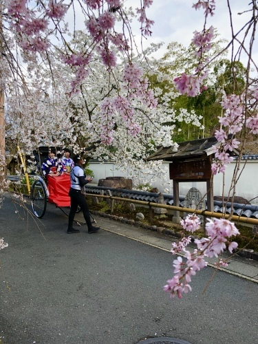 桜フィーバー続く。。。_a0197730_15050123.jpg