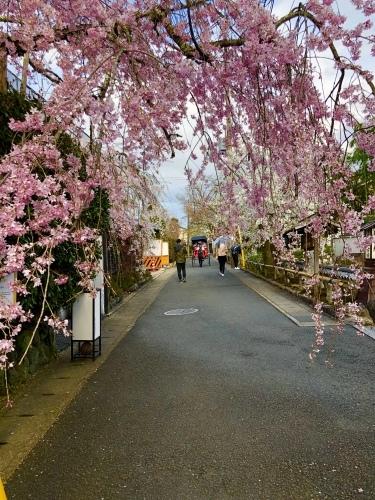桜フィーバー続く。。。_a0197730_15060887.jpg