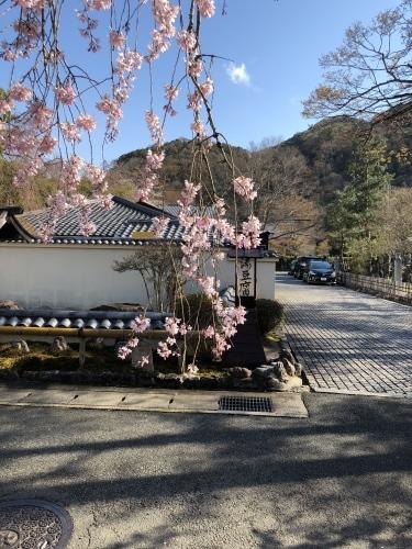 桜フィーバー続く。。。_a0197730_15062828.jpg
