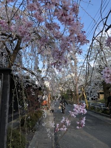 桜フィーバー続く。。。_a0197730_15073062.jpg
