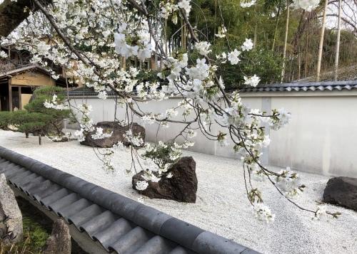 桜フィーバー続く。。。_a0197730_15132348.jpg