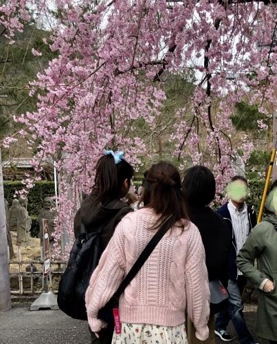 桜フィーバー続く。。。_a0197730_15135293.jpg