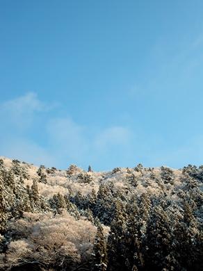 春雪梅花・・・R367の「雪と桜」前線_d0005250_1953561.jpg