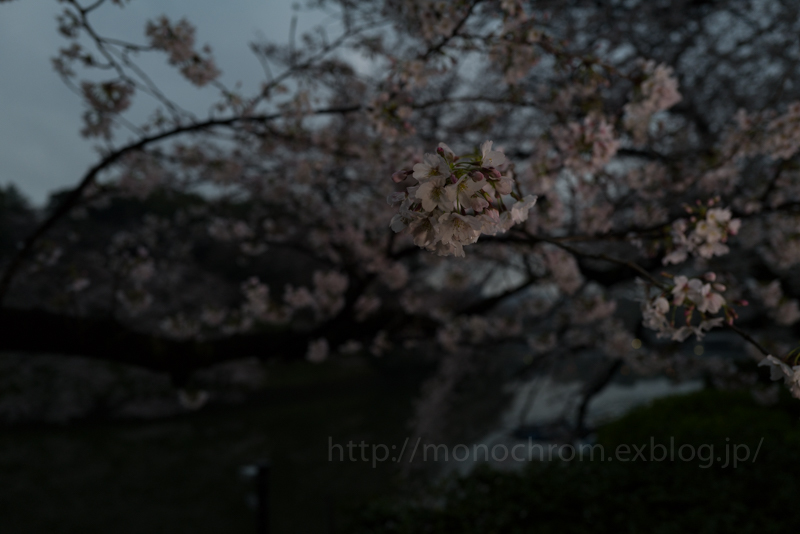 Leica Q2 First Impression 初撮 vol.6 Sakura_c0219256_17132641.jpg
