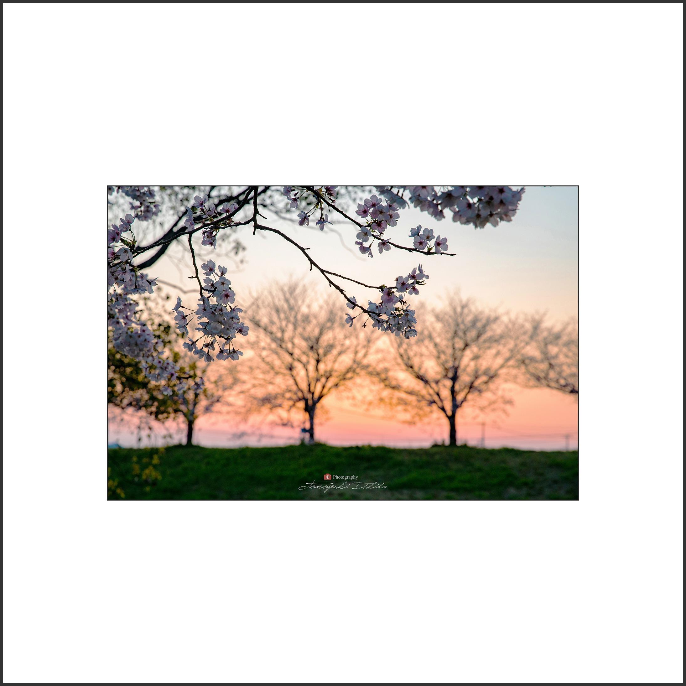 夕陽に誘われて_c0253556_06425205.jpg