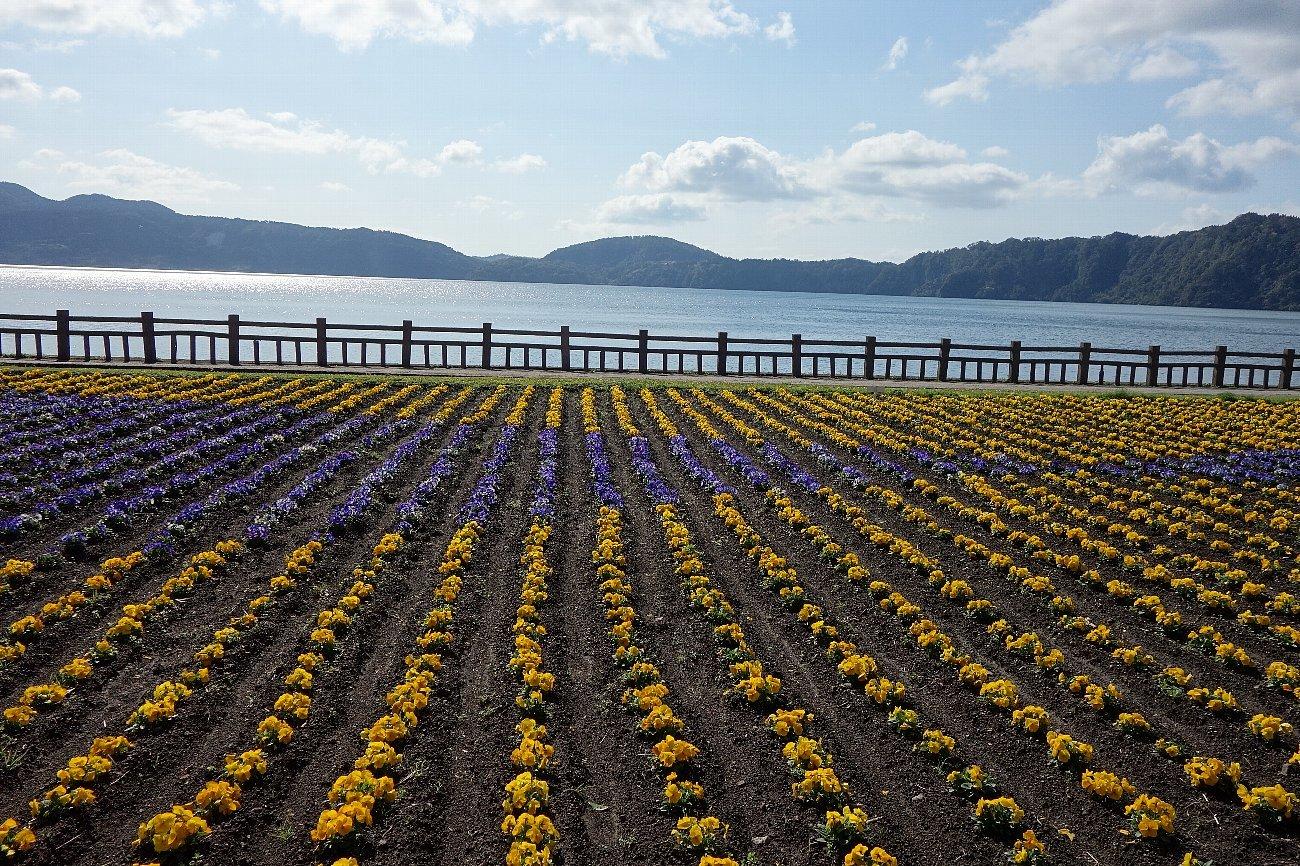 池田湖とイッシー_c0112559_08085801.jpg
